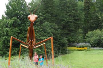 Giant Praying Mantis at Morris Arboretum