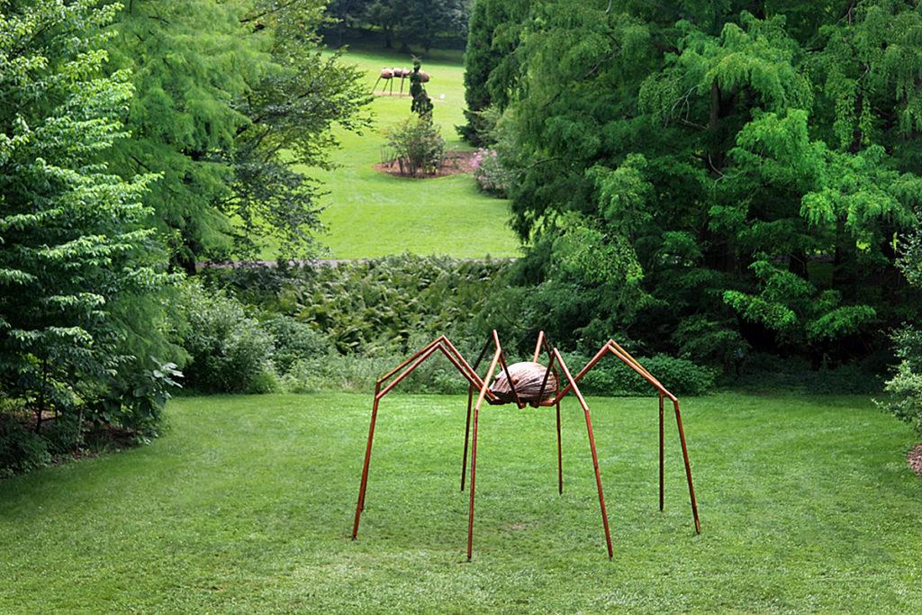 Giant Daddy Longlegs spider