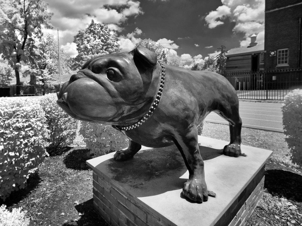 Haddonfield High School's bulldog statue