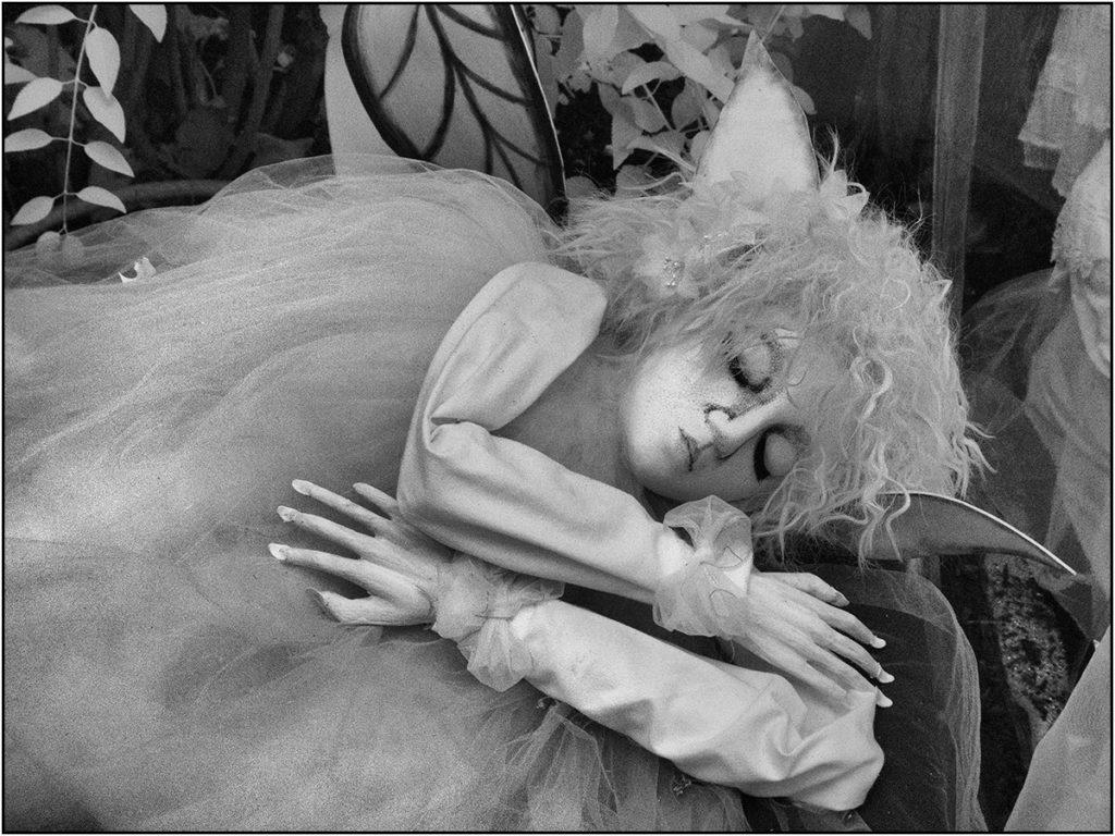 A Dolores Dragan creature sleeps