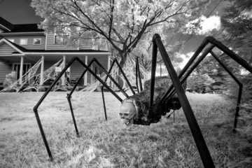 Giant halloween spider on house lawn