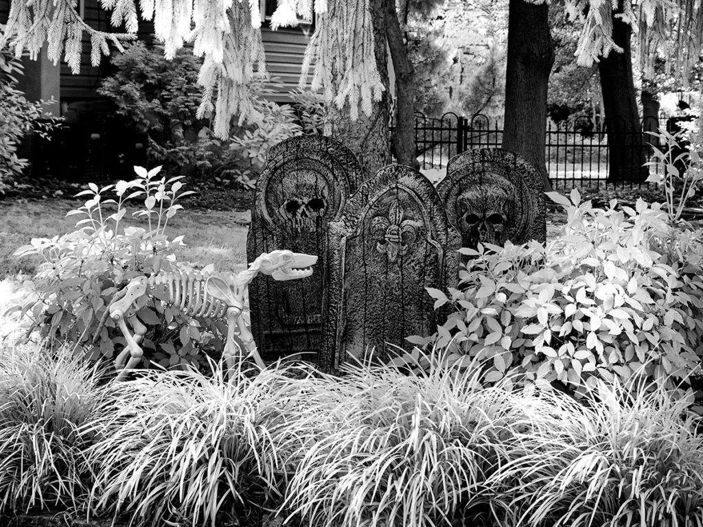 Dog skeleton and grave stones in a Halloween display