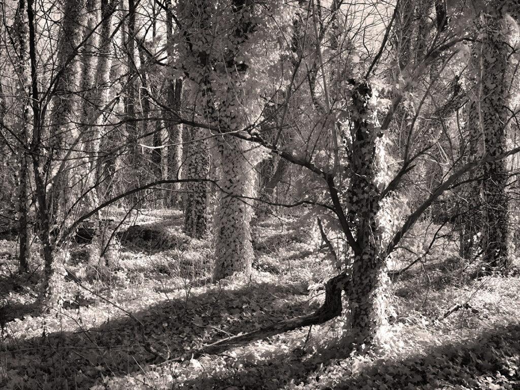 Sadler's Woods is a dense forest.