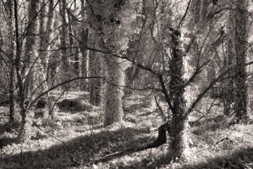 kudzu overtaking sections of Sadler's Woods in Camden County, NJ